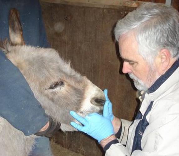 Jack Easley Equine Dentistry