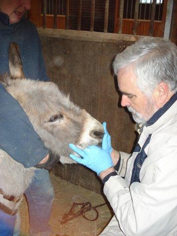 Little horse dentistry