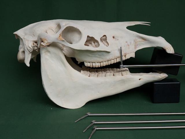 Skull and dental picks