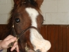 Wry nose foal