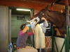 Dr. Hatzel Equine Oral Examination